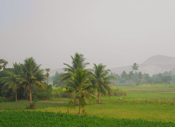 palmy_Indie