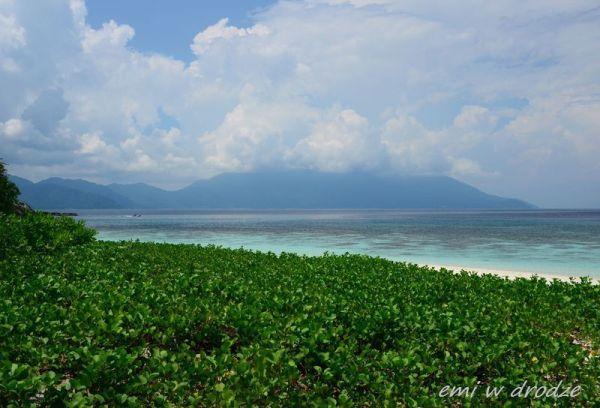 Coral_island_zarosla